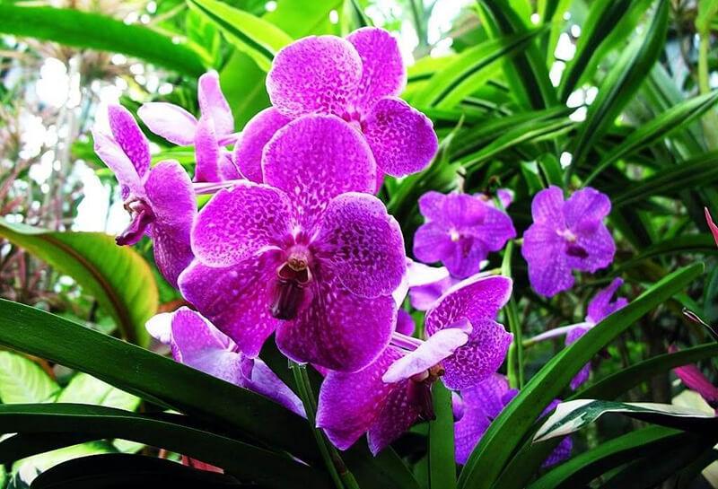 Hoa phong lan phù hợp với các cung Bạch Dương